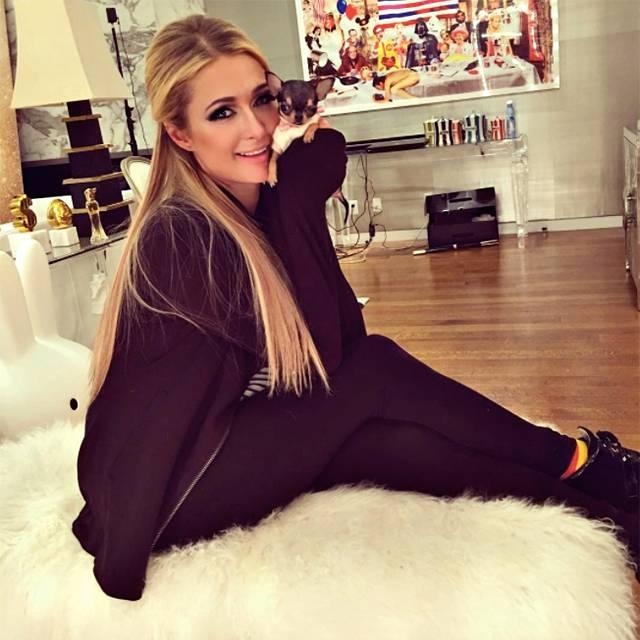 Paris Hilton, capricci da vip: il suo nuovo chihuahua vale 7200 euro