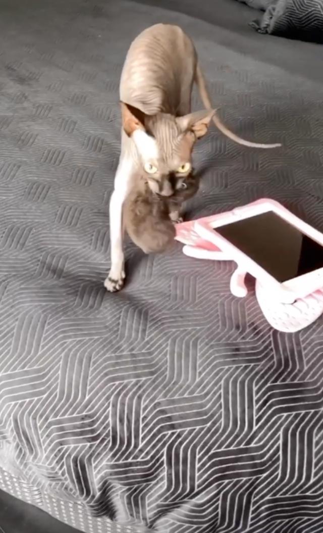 La gatta di Ilary Blasi ama tal punto i capi fashion della conduttrice che...