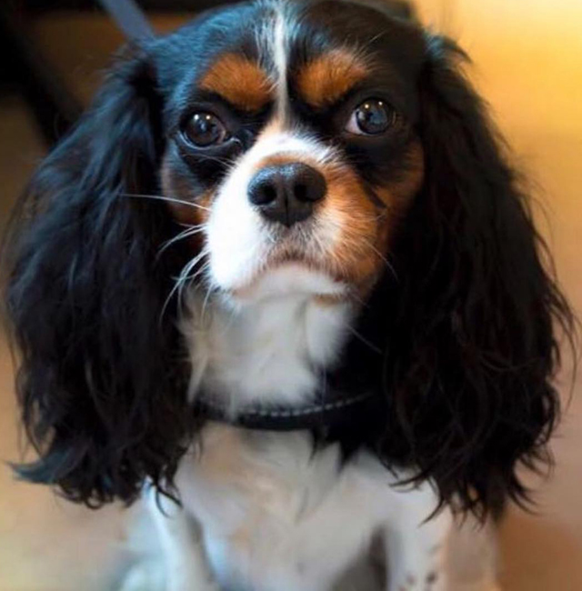 Godzilla, Selvaggia Lucarelli's dog, takes Viagra every day