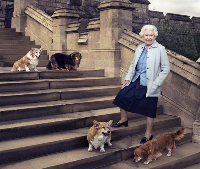 La Regina Elisabetta, 94 anni, con alcuni degli ultimi cani avuti, morti tutti (tranne uno) nell'arco di pochi anni. Ora sono arrivati due nuovi cuccioli di corgi