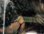 Coccole e baci che non rimangono nascoste agli occhi indiscreti dei paparazzi: Thyago Alves ed Emanuela Tittocchia