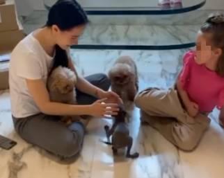 Michelle Hunziker prende un nuovo cane