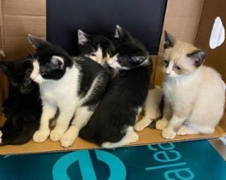 Ilary Blasi, i gattini compiono due mesi